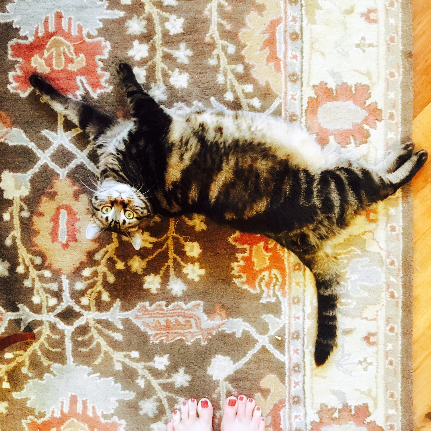 The effect of a cat on motivation and routine